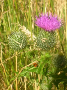 Anglesey fauna